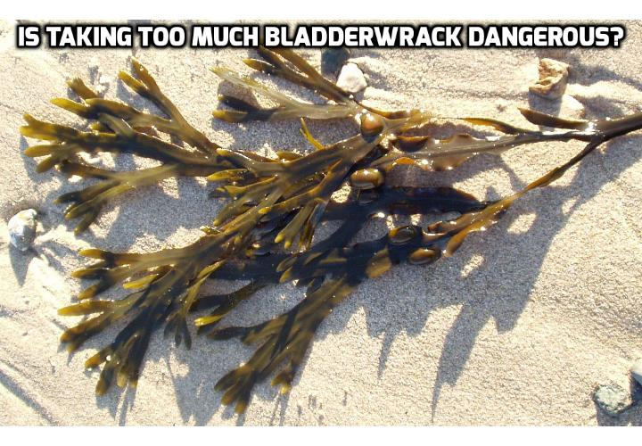 Thyroid Remedy - Is Taking Too Much Bladderwrack Dangerous? A Bladderwrack thyroid remedy is considered generally safe and effective when taken as recommended. There are three factors to consider before purchasing this type of supplement.